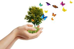 butterflies & Tree