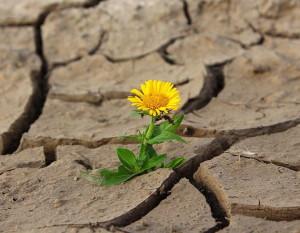 Flower in rocks